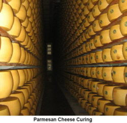 Parmesan Cheese Factory, Italy
