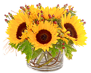 Beaming sunflowers in a splendidly yellow bowl arrangement.